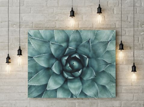 flora-and-flowers-canvas